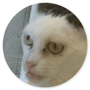 стикеры про кошек